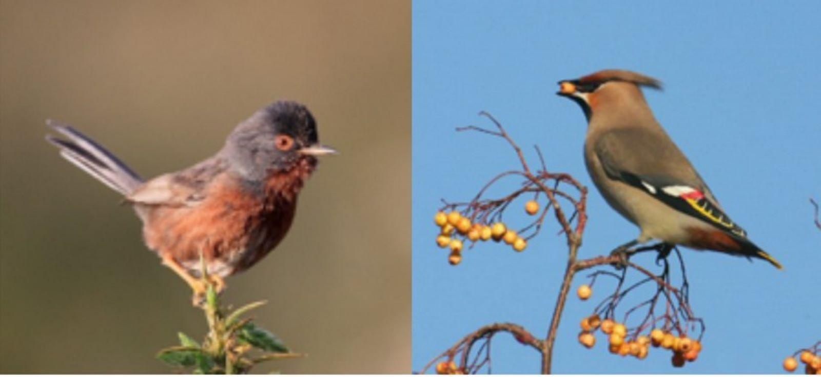 RSPB – The Birds of Surrey