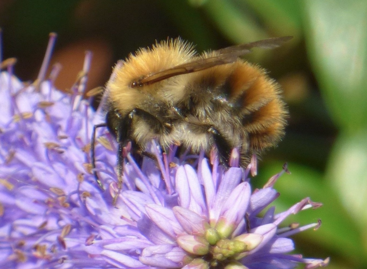 The Bees in Your Garden by Michelle Ernoult